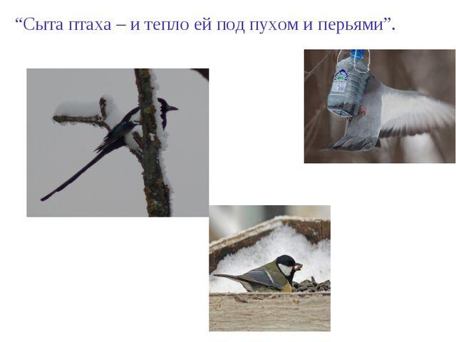 """""""Сыта птаха – и тепло ей под пухом и перьями""""."""