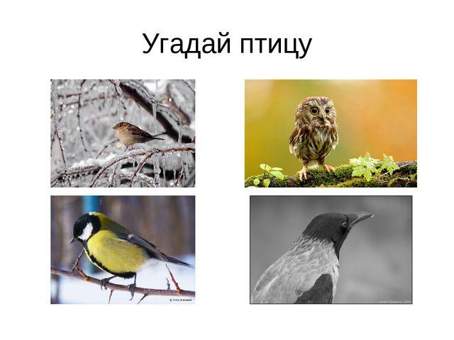 Угадай птицу
