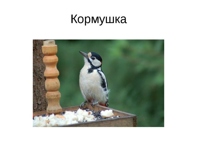 Кормушка