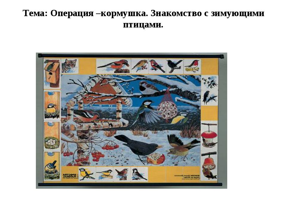 Тема: Операция –кормушка. Знакомство с зимующими птицами.