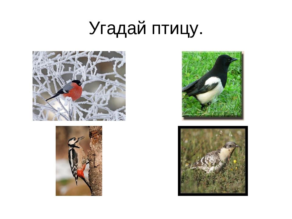 Угадай птицу.