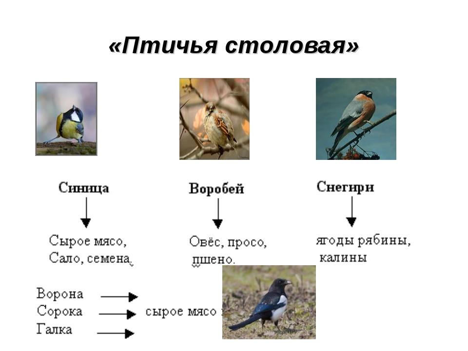 «Птичья столовая»