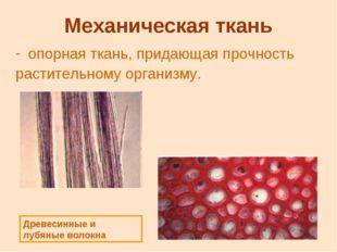 Механическая ткань опорная ткань, придающая прочность растительному организму