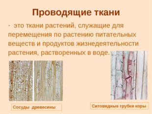 Проводящие ткани это ткани растений, служащие для перемещения по растению пит
