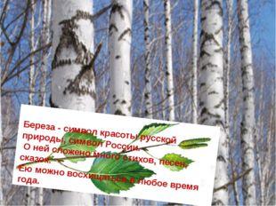 Береза - символ красоты русской природы, символ России. О ней сложено много с