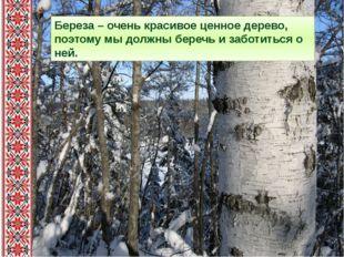 Береза – очень красивое ценное дерево, поэтому мы должны беречь и заботиться