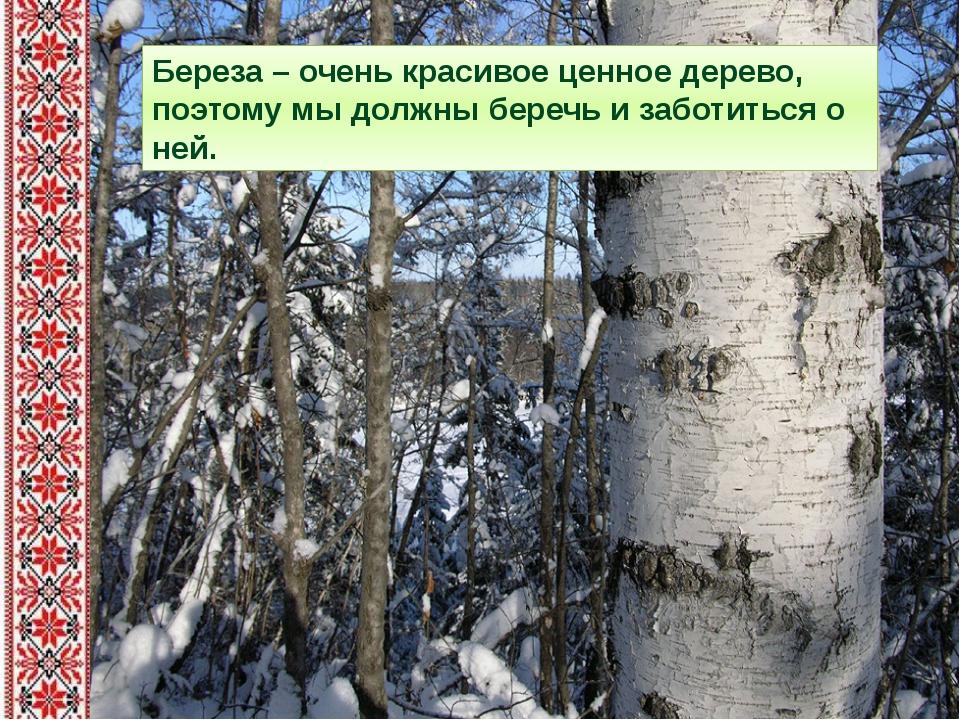 Береза – очень красивое ценное дерево, поэтому мы должны беречь и заботиться...