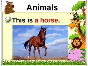 Animals This is a horse.
