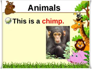 Animals This is a chimp.