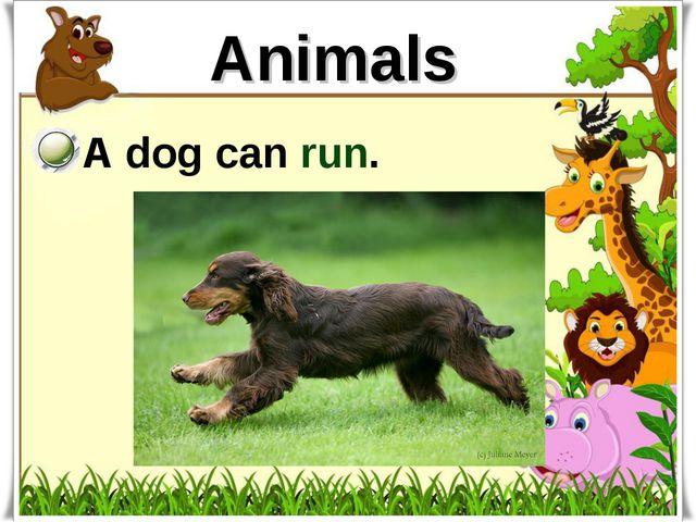 Animals A dog can run.