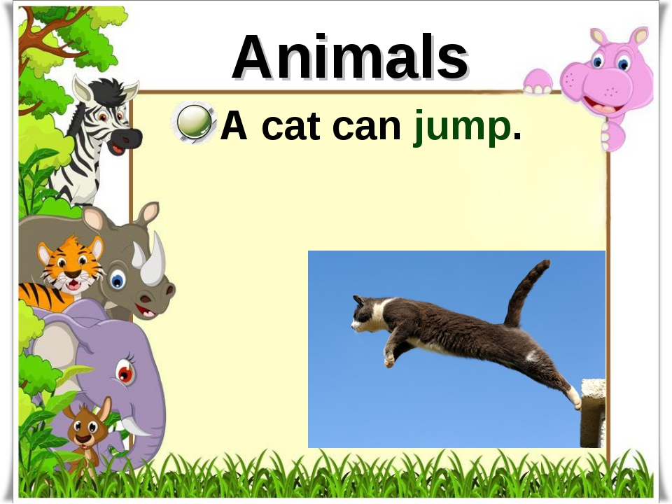 Animals A cat can jump.