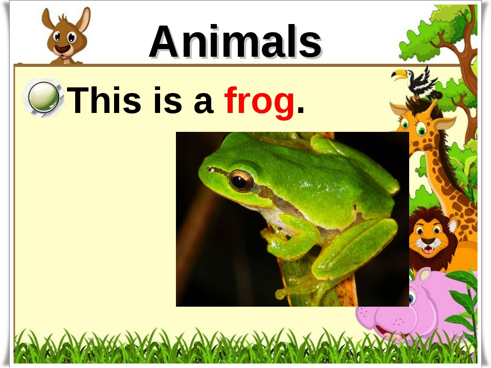 Animals This is a frog.
