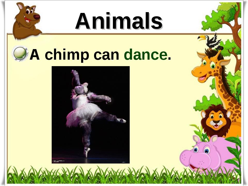 Animals A chimp can dance.
