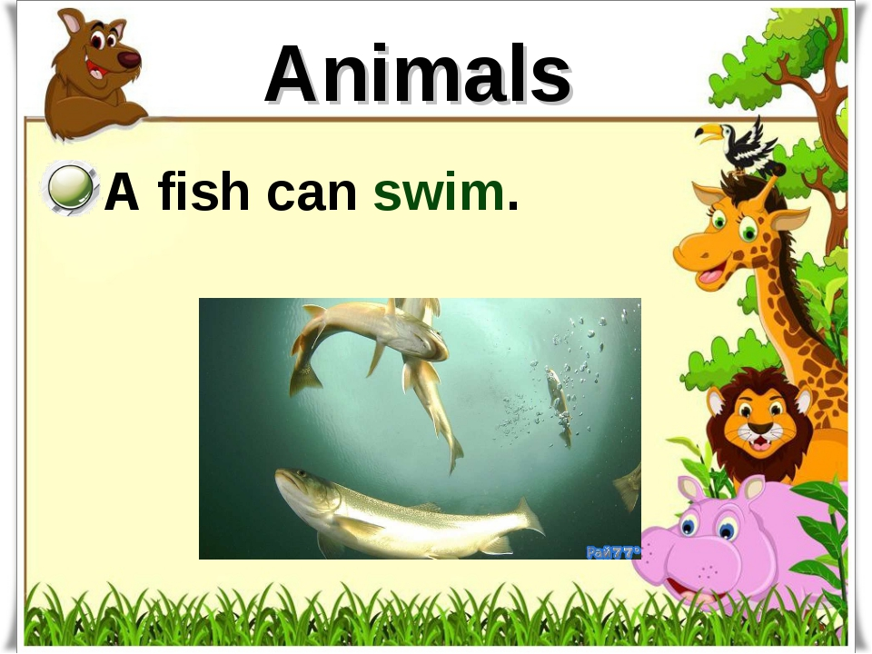 Animals A fish can swim.
