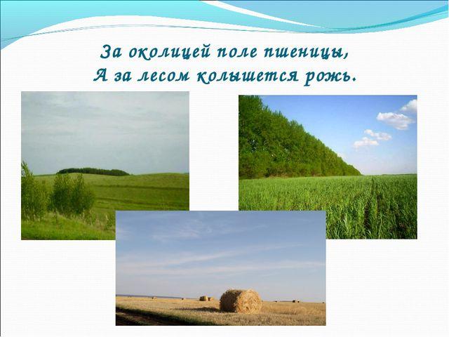 За околицей поле пшеницы, А за лесом колышется рожь.