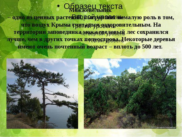 Можжевельник – одно из ценных растений, сыгравших немалую роль в том, что воз...
