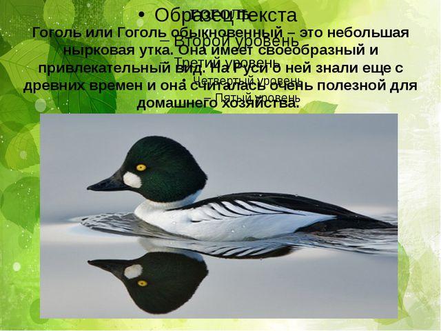 ГОГОЛЬ Гоголь или Гоголь обыкновенный – это небольшая нырковая утка. Она имее...
