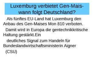 Luxemburg verbietet Gen-Mais- wann folgt Deutschland? Als fünftes EU-Land hat