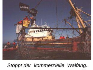 Stoppt der kommerzielle Walfang.