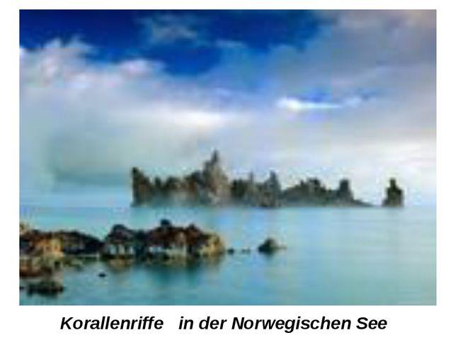 Korallenriffe in der Norwegischen See