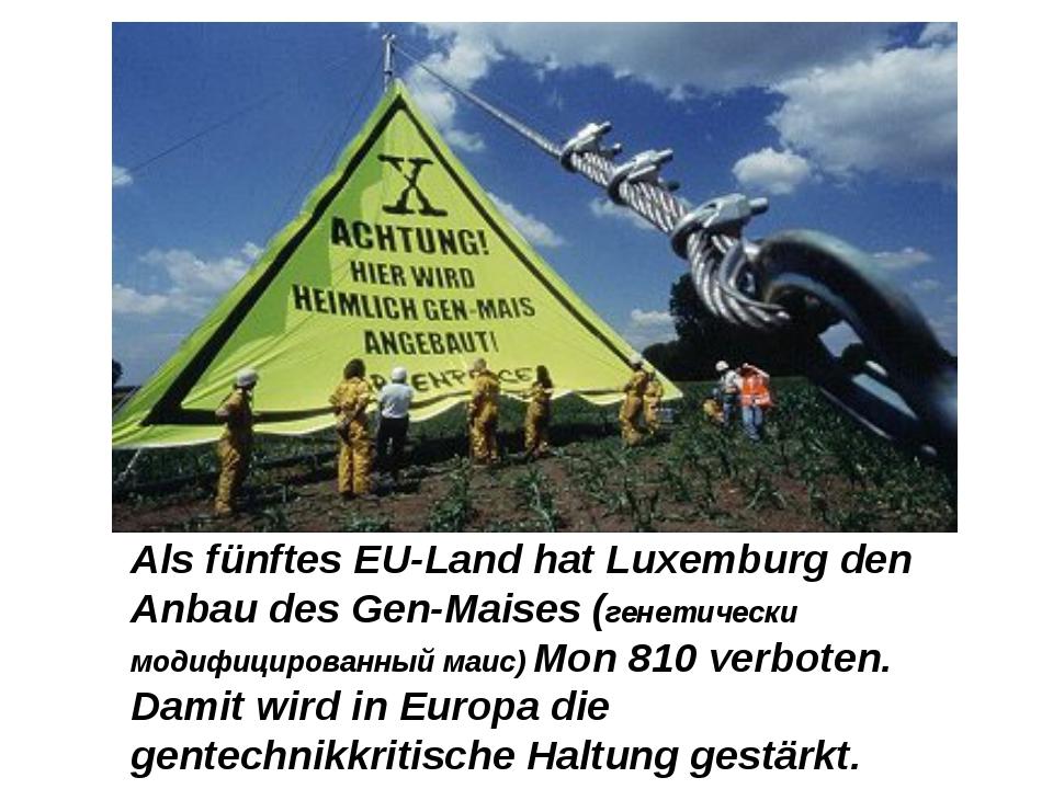 Als fünftes EU-Land hat Luxemburg den Anbau des Gen-Maises (генетически модиф...