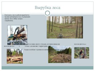 Вырубка леса Ежегодно у нас в районе вырубается тысячи кубометров леса. В рез