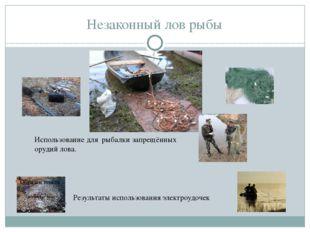Незаконный лов рыбы Результаты использования электроудочек Использование для