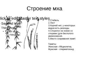 Строение мха 1.Стебель 2.Лист 3.Корней нет, у некоторых видов есть ризоиды. 4