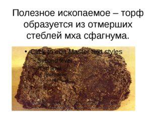 Полезное ископаемое – торф образуется из отмерших стеблей мха сфагнума.