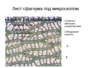 Лист сфагнума под микроскопом 1.Клетки с зелеными хлоропластами, 2.Воздушные