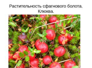 Растительность сфагнового болота. Клюква.