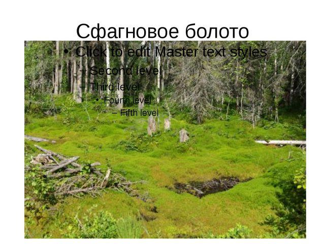 Сфагновое болото