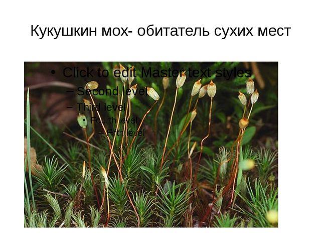 Кукушкин мох- обитатель сухих мест