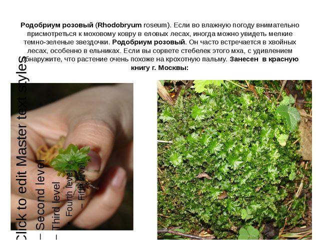 Родобриум розовый (Rhodobryum roseum). Если во влажную погоду внимательно при...