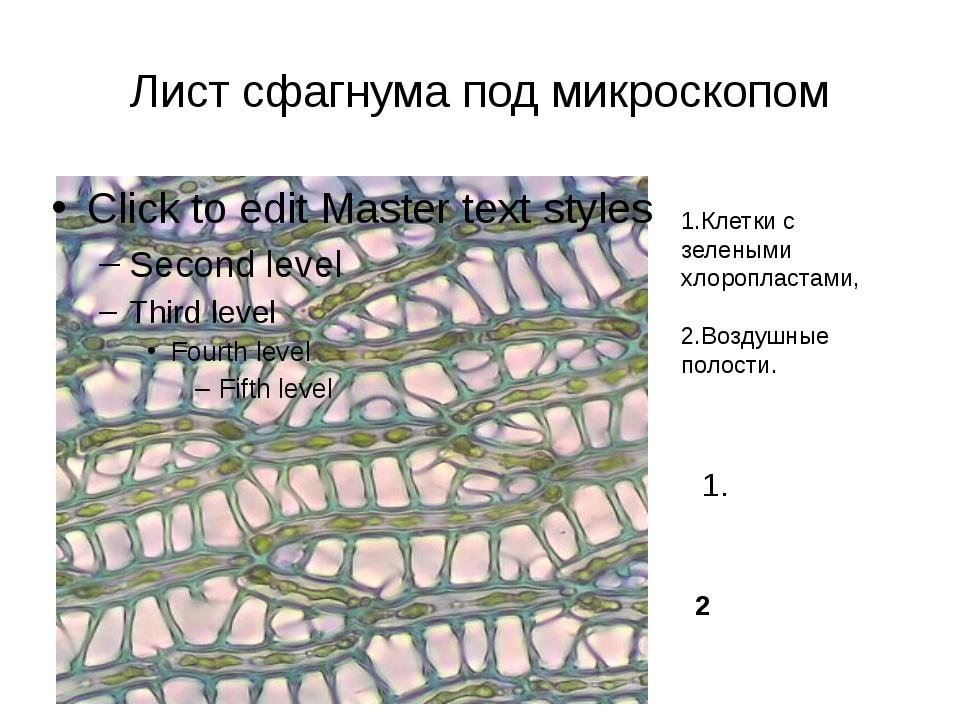 Лист сфагнума под микроскопом 1.Клетки с зелеными хлоропластами, 2.Воздушные...