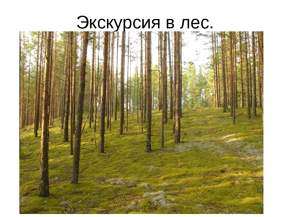 Экскурсия в лес.