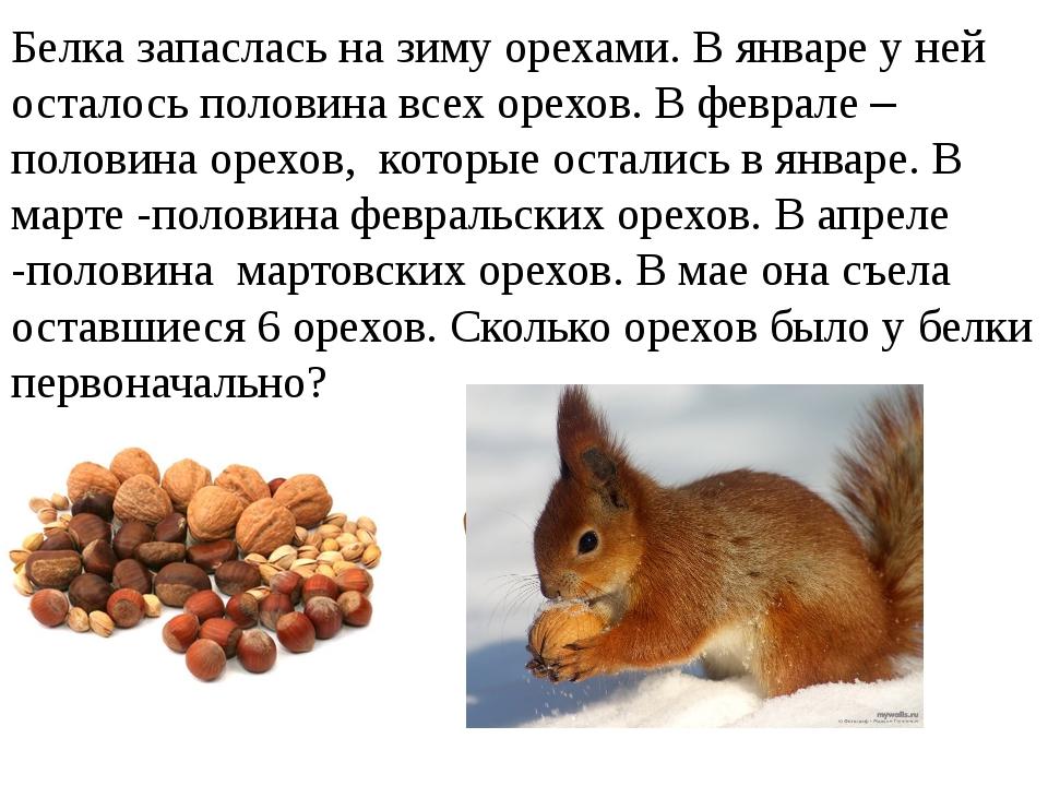 Белка запаслась на зиму орехами. В январе у ней осталось половина всех орехов...