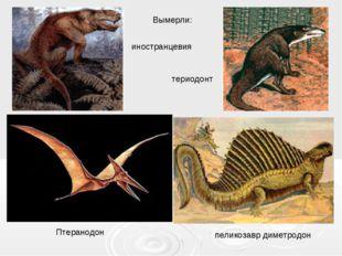 пеликозавр диметродон иностранцевия териодонт Птеранодон Вымерли: