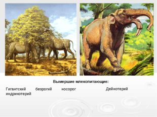 Гигантский безрогий носорог индрикотерий Вымершие млекопитающие: Дейнотерий