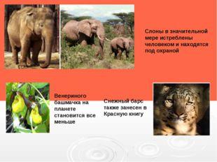 Снежный барс также занесен в Красную книгу Слоны в значительной мере истребле