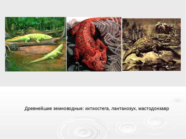 Древнейшие земноводные: ихтиостега, лантанозух, мастодонзавр