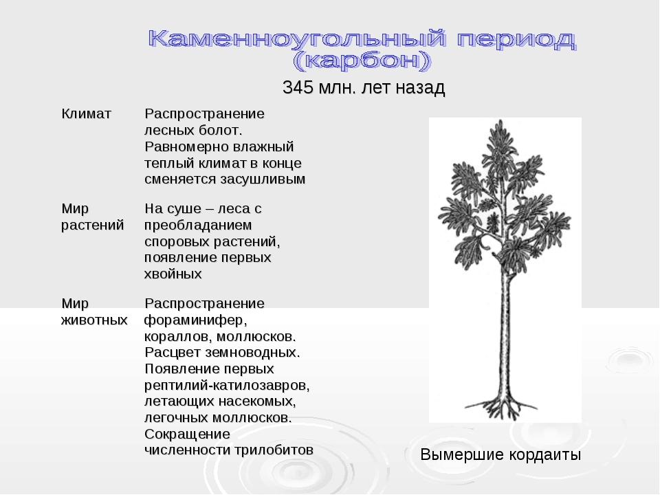 345 млн. лет назад Вымершие кордаиты КлиматРаспространение лесных болот. Рав...