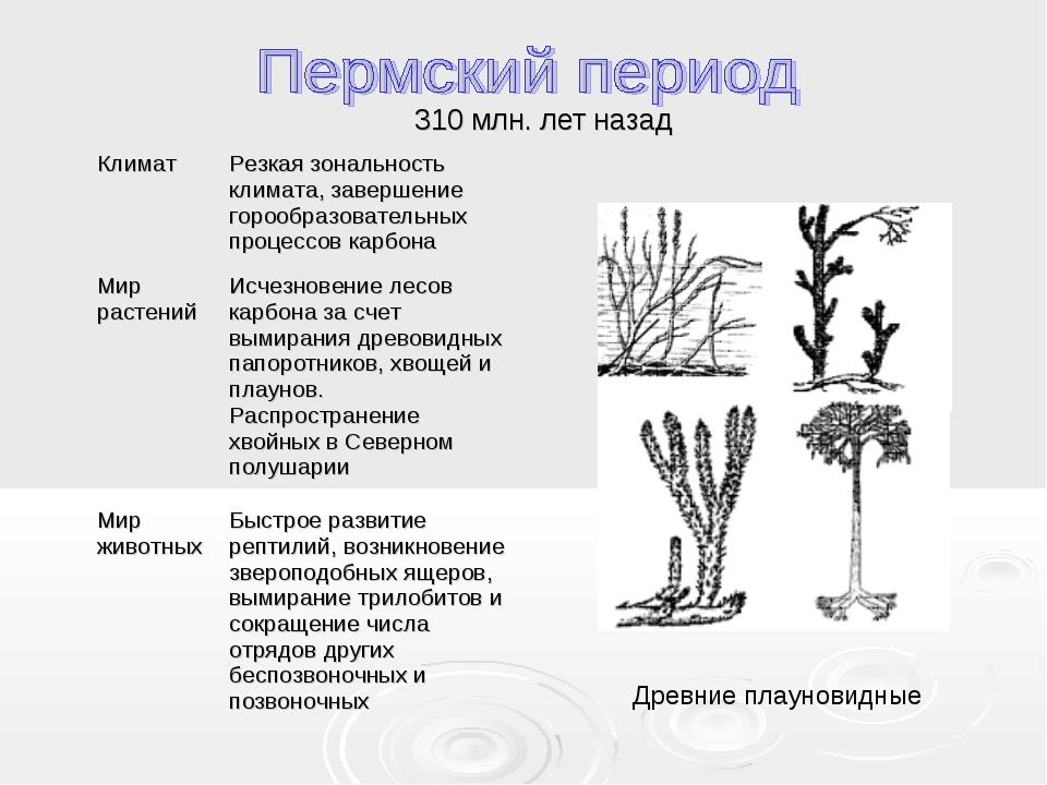 310 млн. лет назад Древние плауновидные КлиматРезкая зональность климата, за...