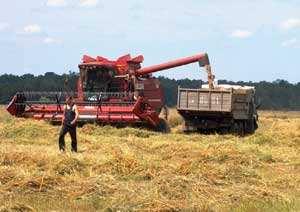 Детские картинки - Осенью пшеница созревает