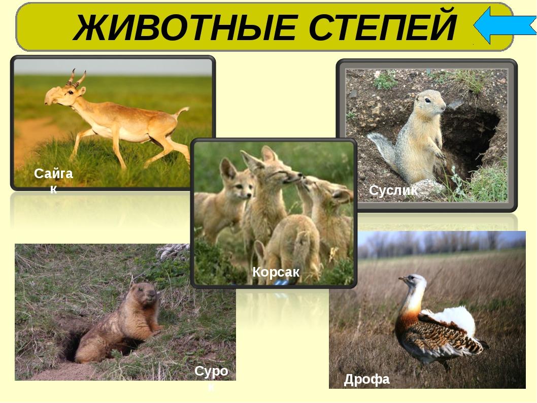 Котопес фото в реальной жизни порода животного