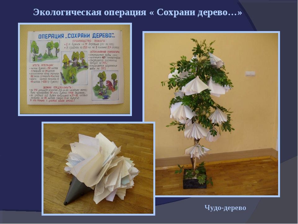 Экологическая операция « Сохрани дерево…» Чудо-дерево