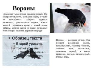 Вороны Она самая умная птица среди пернатых. Ум, сообразительность, смекалка