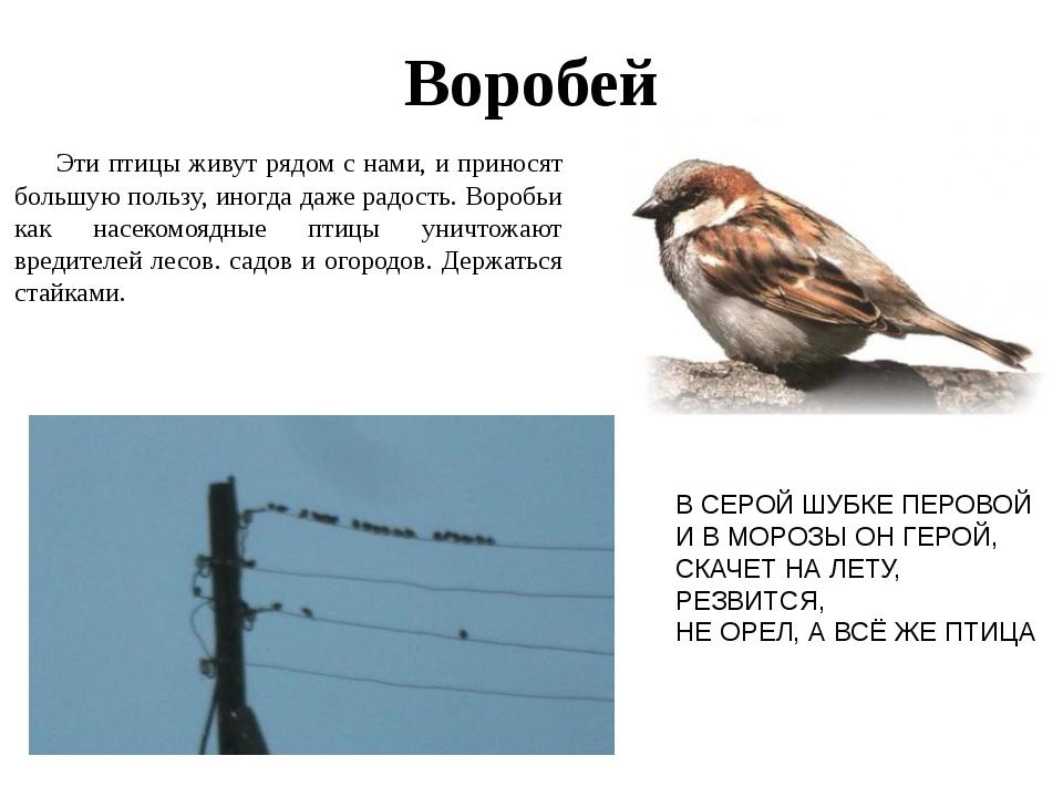ряд: 3XL, какие птицы обитают в алтайском Marmot Американская