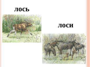 лось лоси