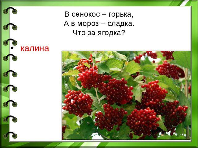 В сенокос – горька, А в мороз – сладка. Что за ягодка? калина